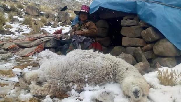 Resultado de imagen para PERDIERON A MILES DE ANIMALES EN NEVADA Y RUEGAN POR FORRAJE