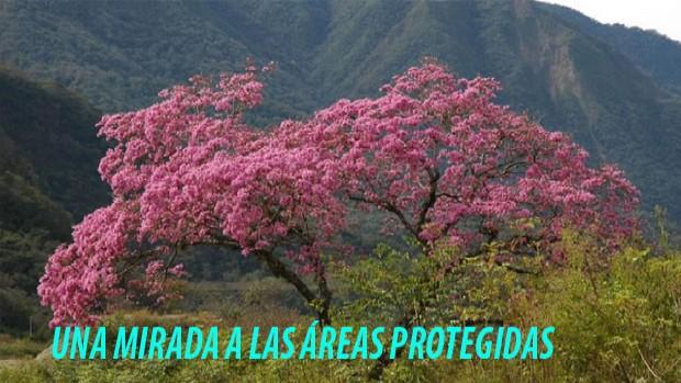 #Bolivia: Madereros avasallan y colonos amenazan Reserva Tariquía